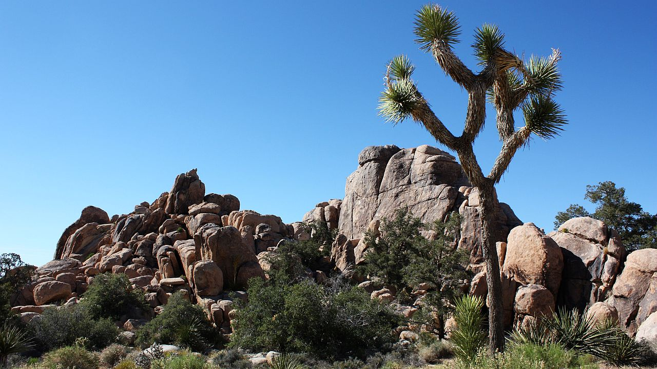 Photo of Joshua Tree National Park