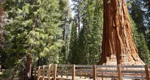 Sequoia National Park Header