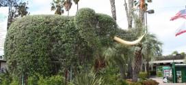 San Diego Zoo Bild