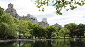 Central Park Bild