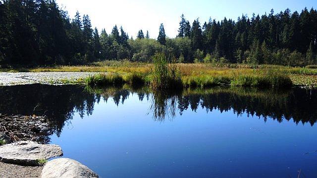 Beaver Lake im Stanley Park Foto