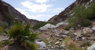 Anza-Borrego Desert State Park Trail