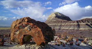 Foto aus dem Petrified Forest National Park