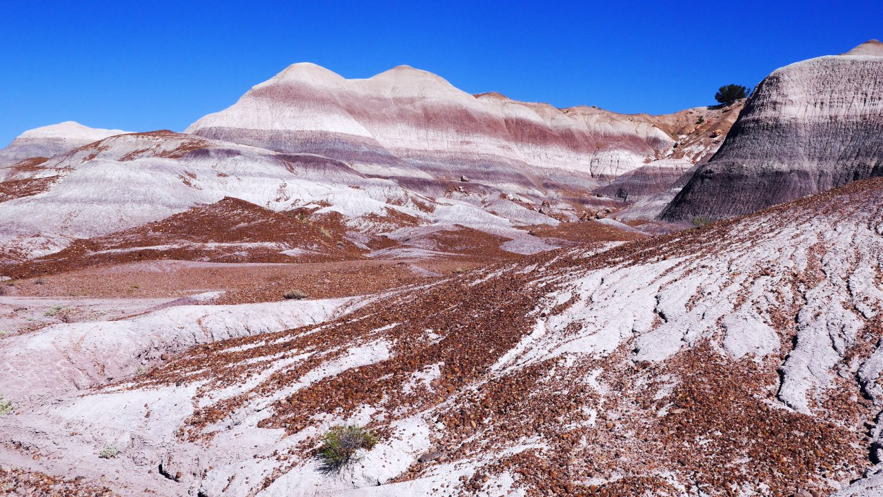 Photo of Petrified Forest National Park
