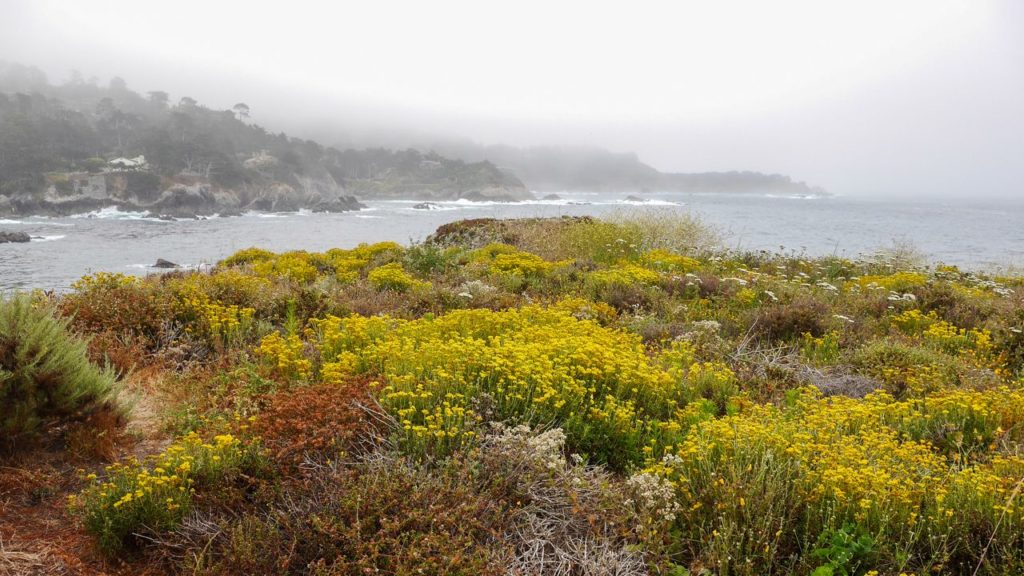 Point Lobos bei Nebel