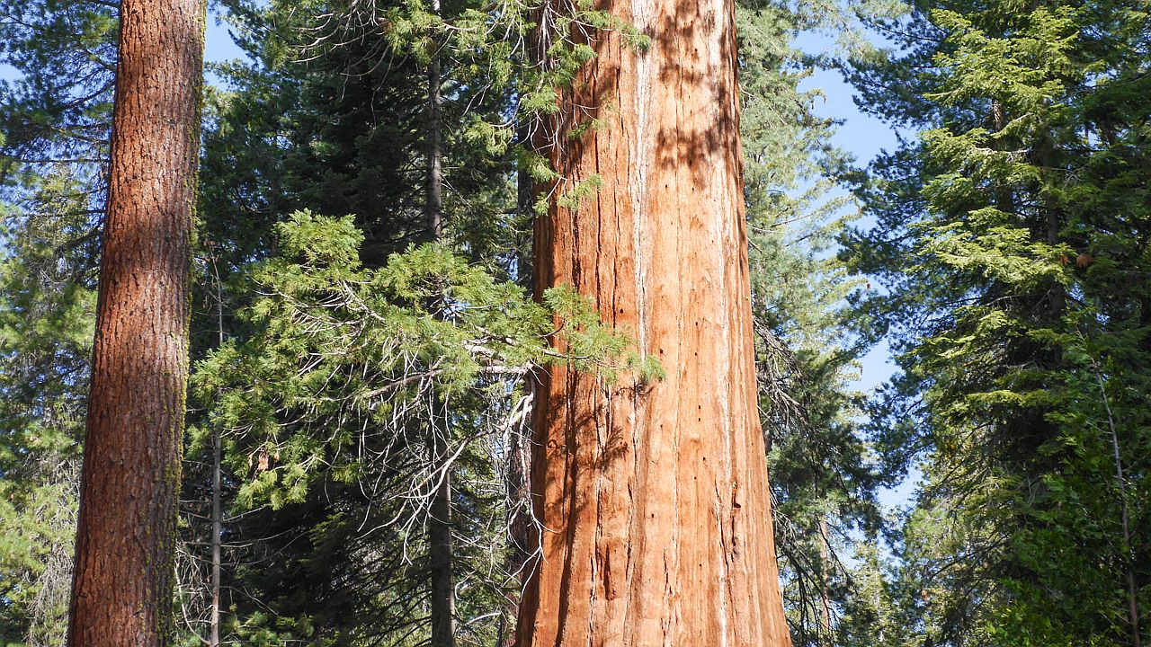Photo of Sequoia National Park